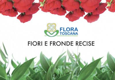 catalogo-fiori-e-fronde-recise