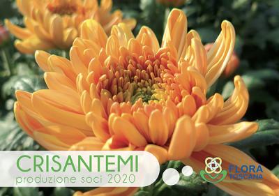 foto-catalogo-crisantemi-2020