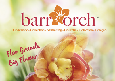 immagine-web-barrorch