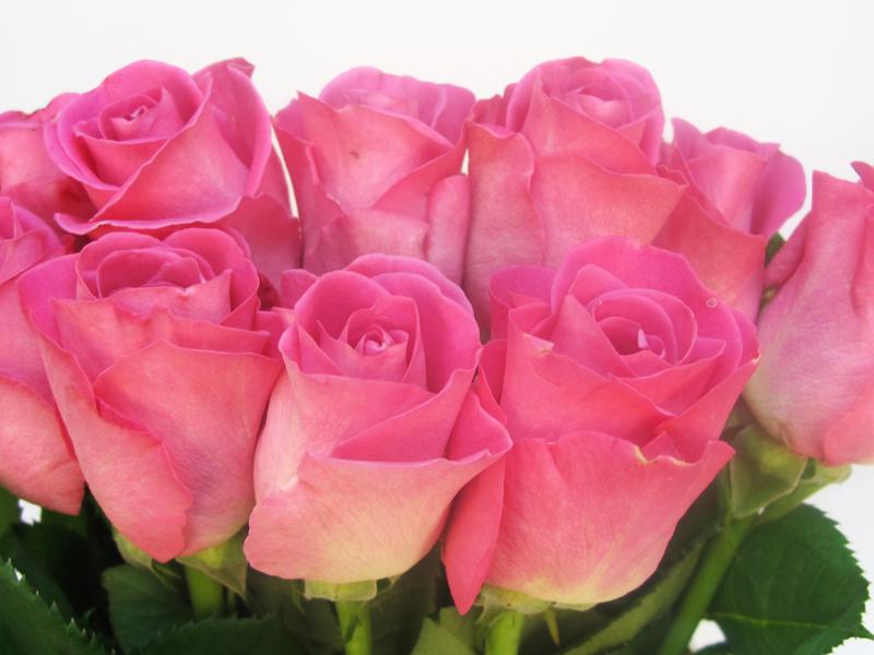 La vendita delle rose vola