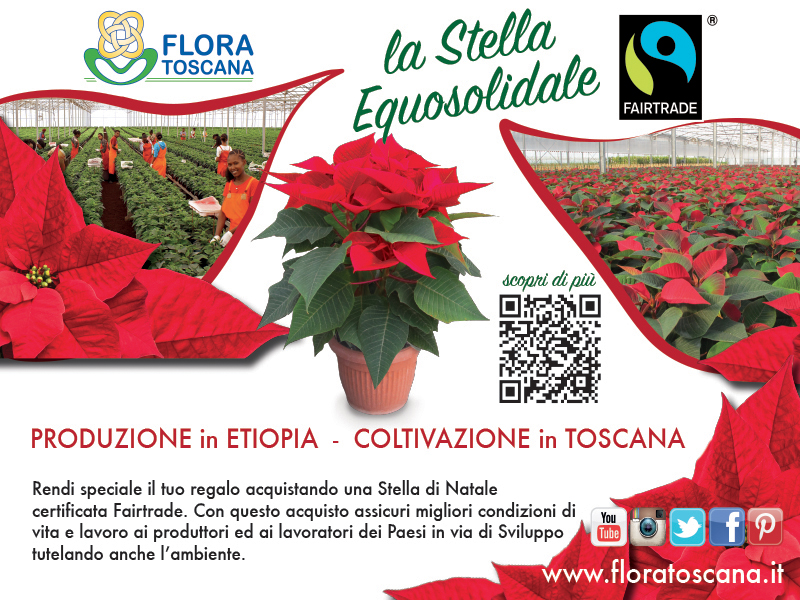 Stelle di Natale Fairtrade