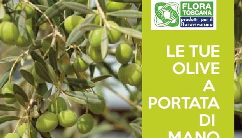 campagna-raccolta-olive
