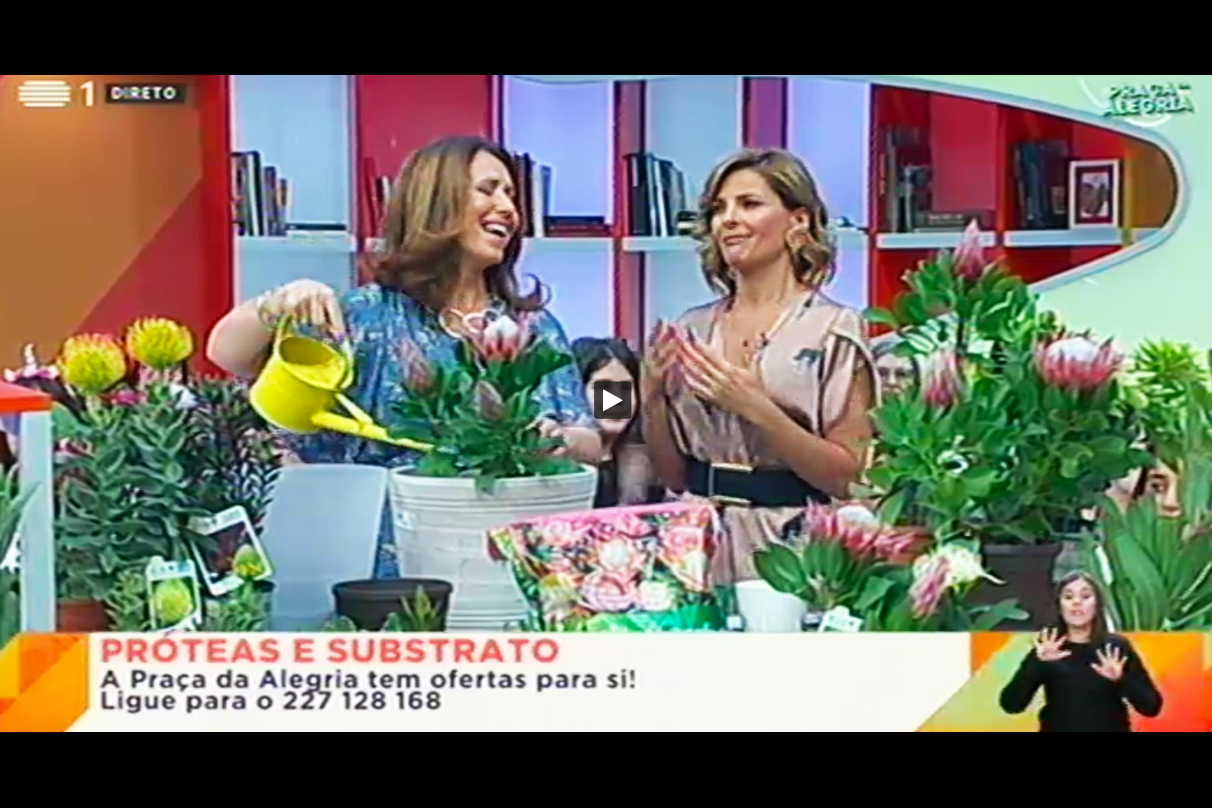 """Le Protee di Flora Toscana protagoniste al """"Dicas da Praça"""" trasmissione della rete nazionale portoghese"""