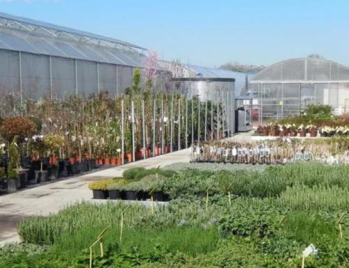 """""""Consentita la vendita di piante e fiori in supermercati, mercati, punti vendita e vivai""""."""