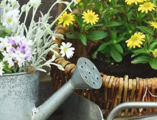 Florovivaismo, alleanza cooperative: ok a vendite di fiori e piante