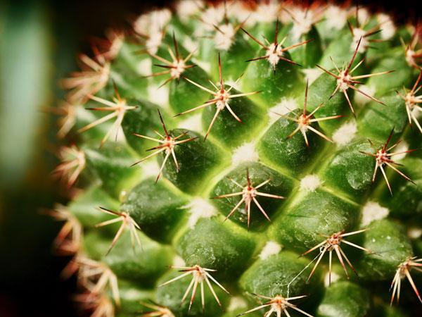 Cactus-Flora Toscana