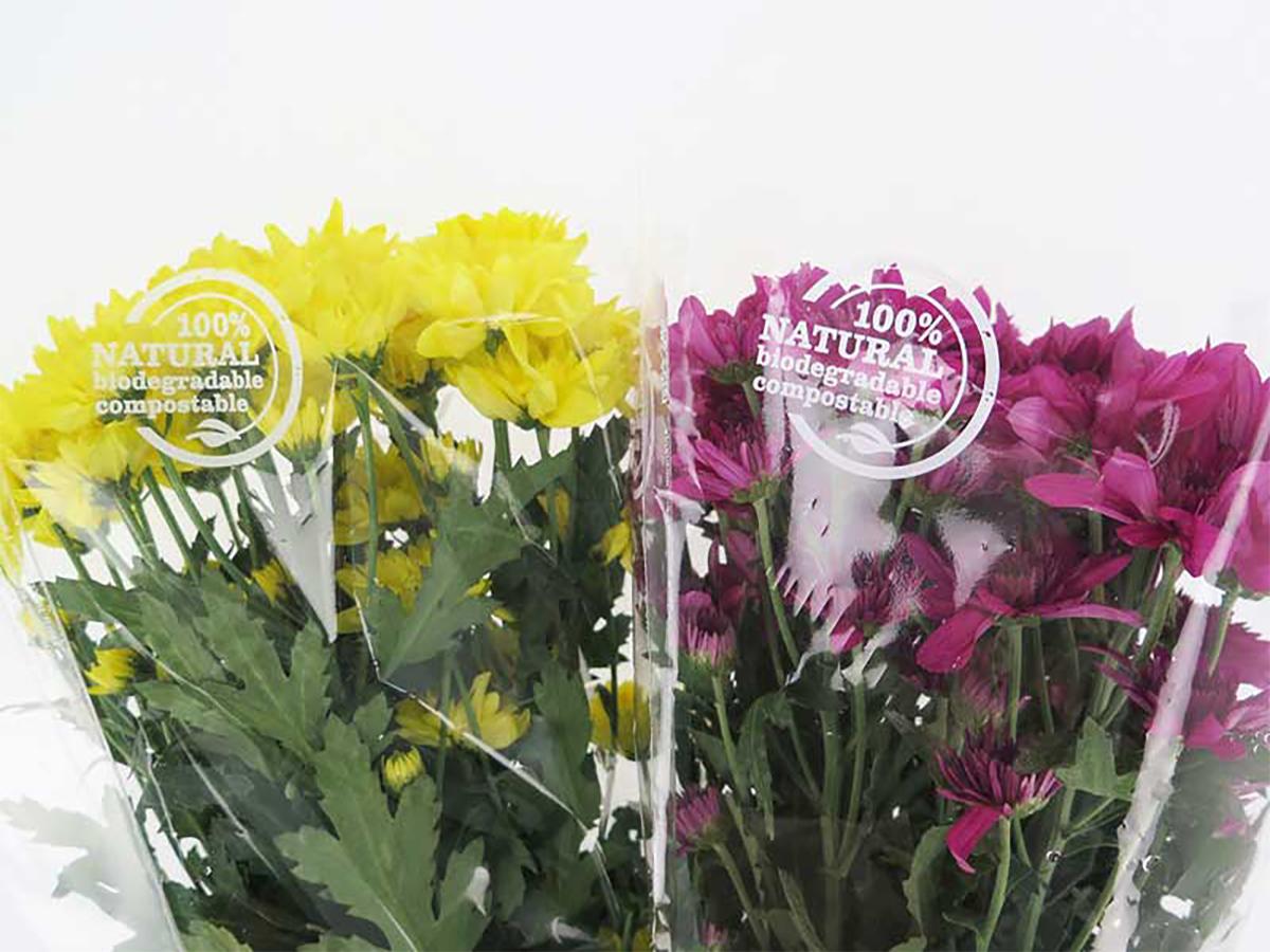 busta-bio-crisantemi